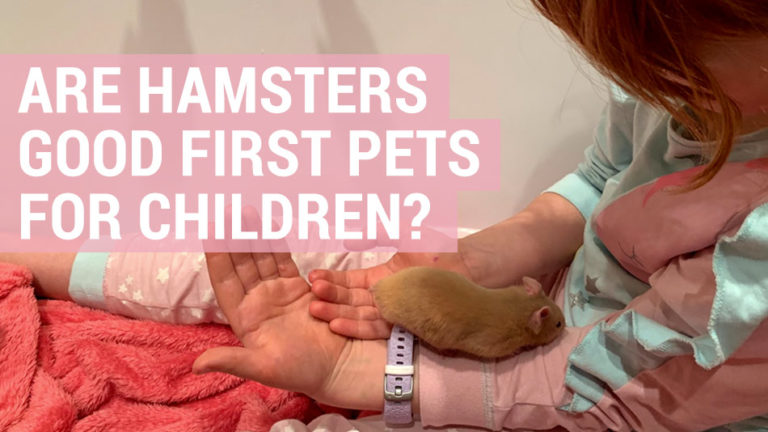 hamsters are good first pets for children