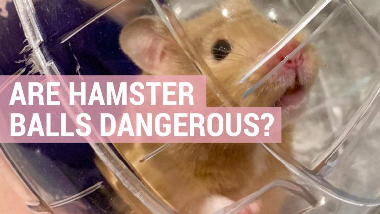 are hamster balls dangerous