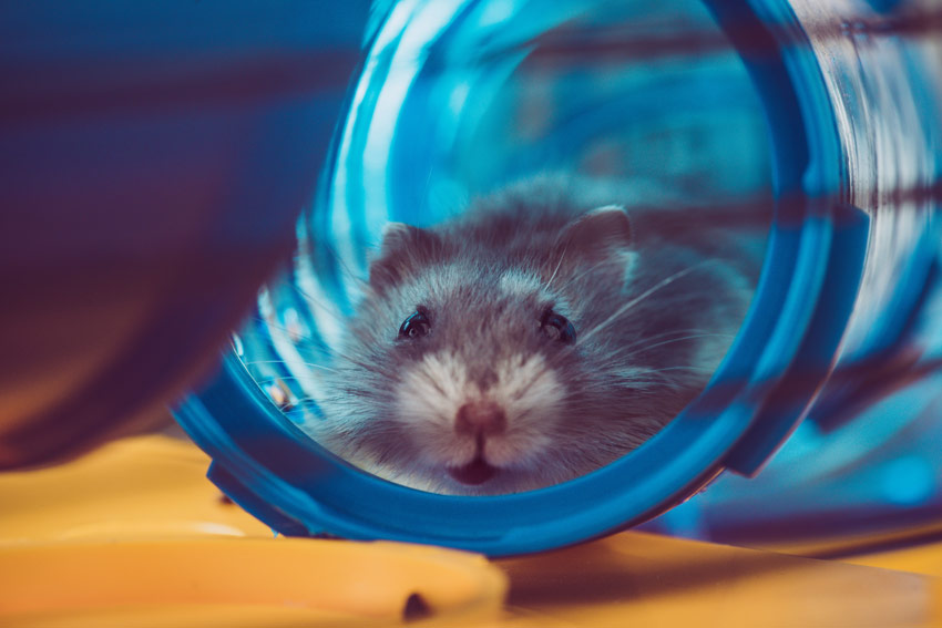 best hamster tubes and accessories