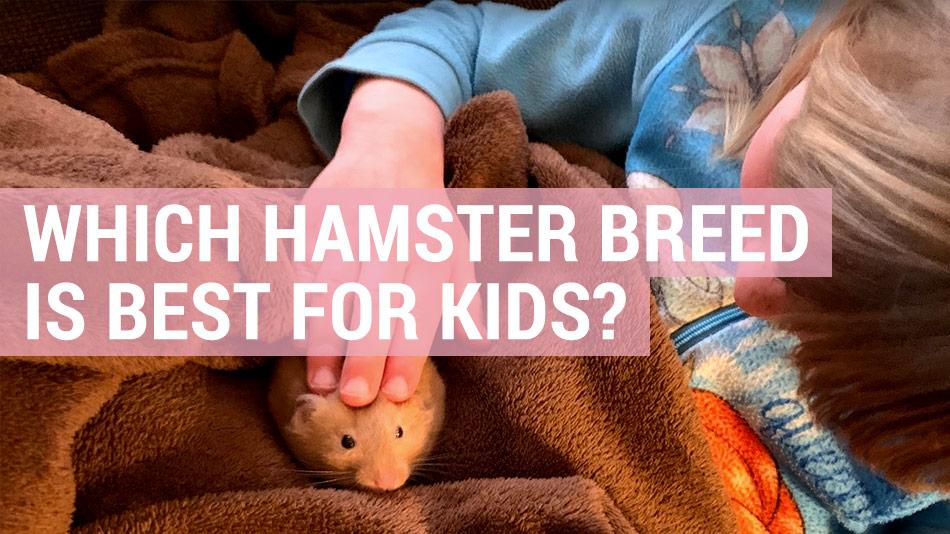 best hamster breed for kids