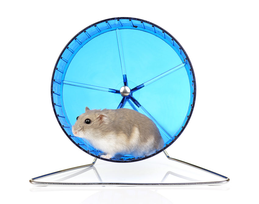 dwarf hamster in the best wheel accessory