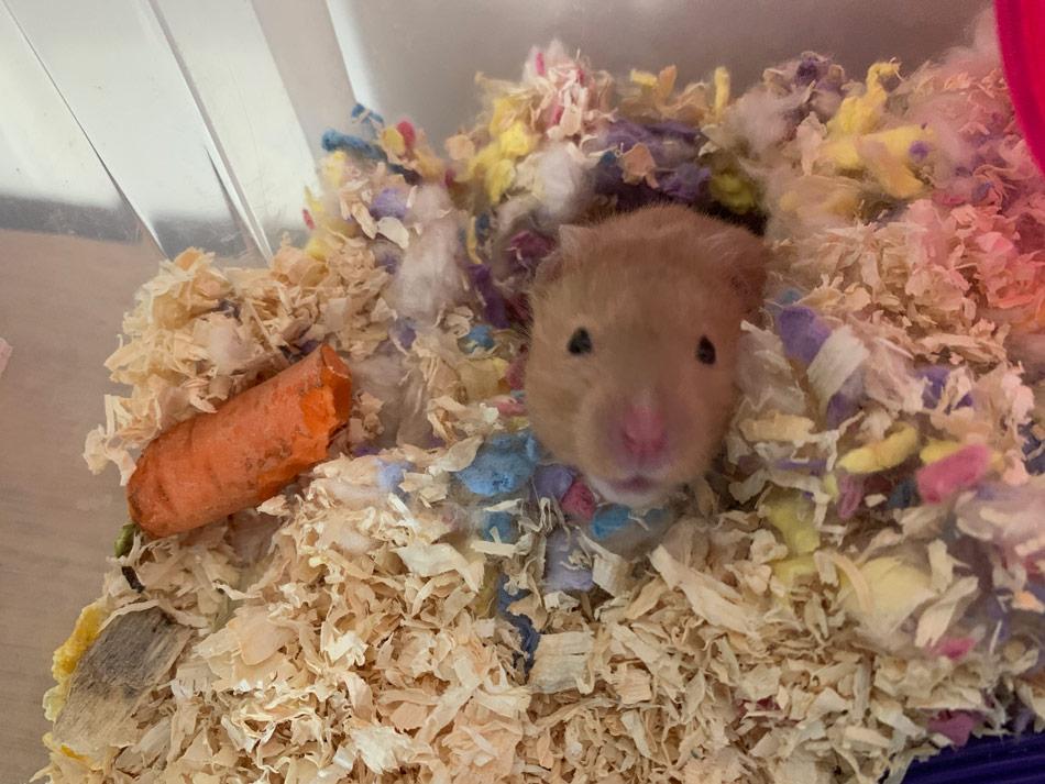 hamster loves his bin cage