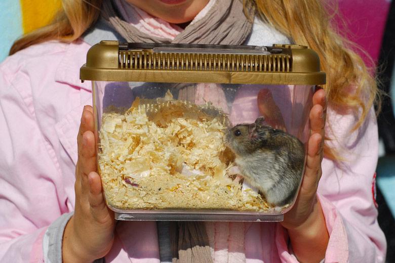 best hamster travel cages