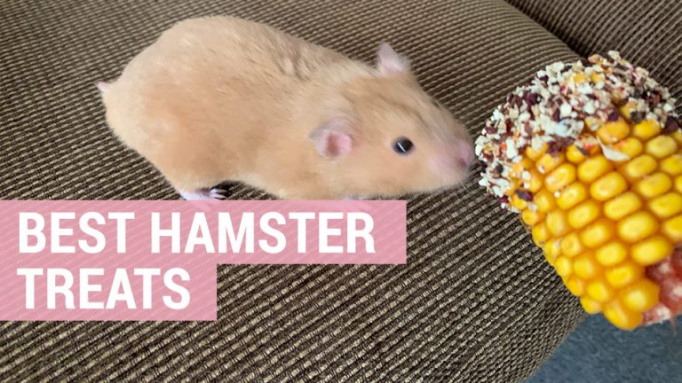 what are the best hamster treats