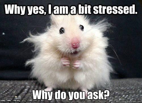 are teddy bear hamsters friendly