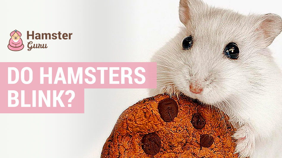 do hamsters blink