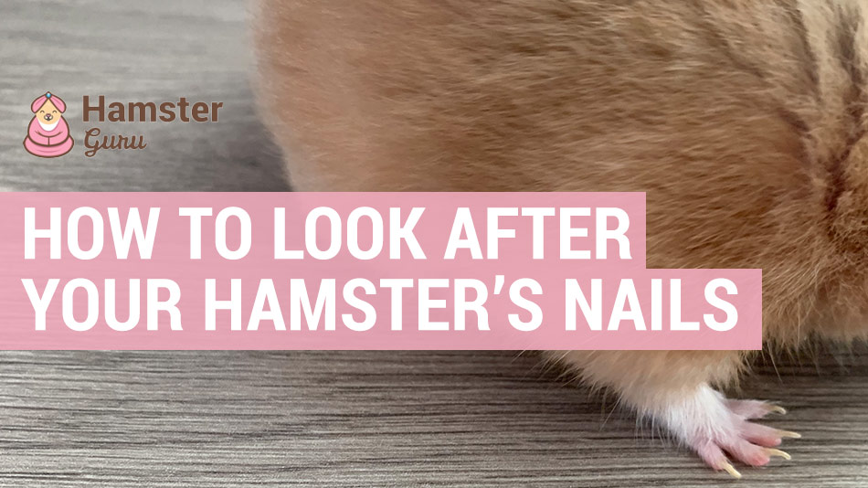 how to look after your hamsters nails