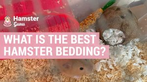 what is the best hamster bedding