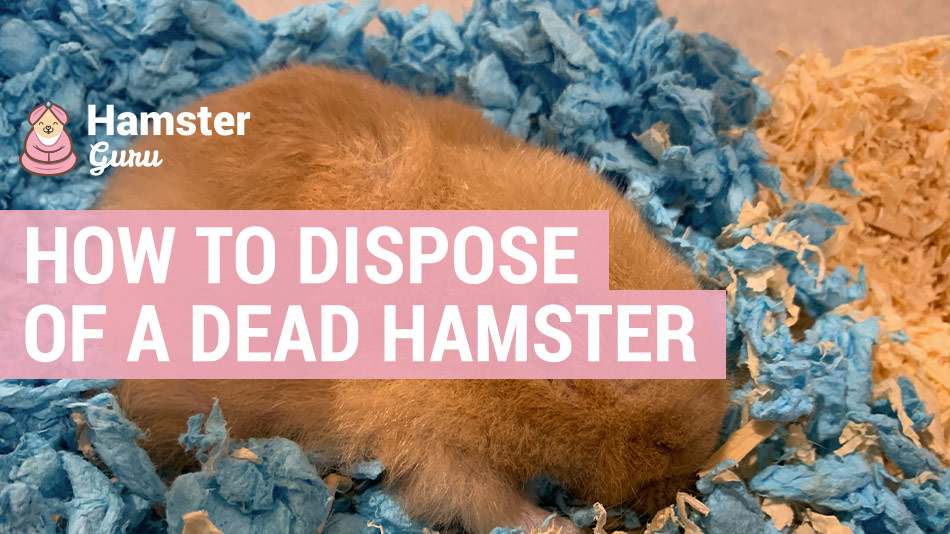 how to dispose of a dead hamster